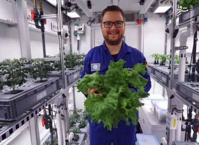 مرکز هوافضایی DLR آلمان، مسئول هماهنگی این پروژه، ادعا می کند محققان از ماه آینده می توانند ۴تا۵ کیلوگرم میوه و سبزیجات برداشت کنند.