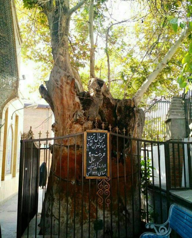 قدیمیترین موجود زنده تهران