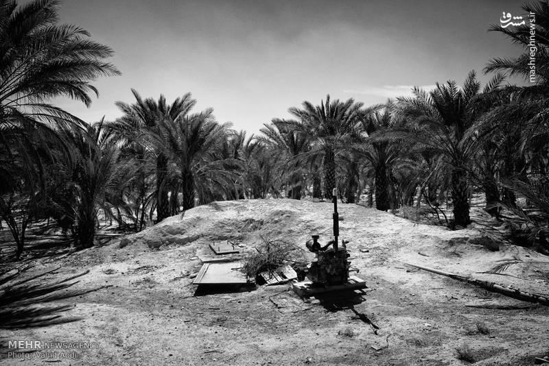 ارندگی ها در استان بوشهر در زمانی انجام می شود که هوا و رطوبت مناسب و آبیاری نیز به دلیل وجود رطوبت کافی نیاز نیست.