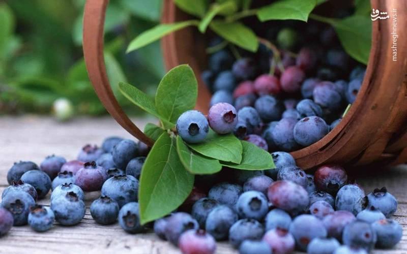 میوههای تجملی را بشناسید؛ به حق میوههای نخورده +عکس