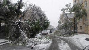 عکس/ خسارات برف به درختان کرج