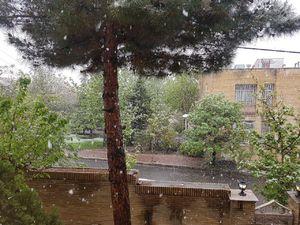 عکس/ بارش اولین برف بهاری در تهران