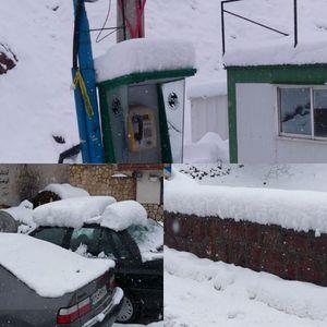 عکس/ بارش سنگین برف در شمشک