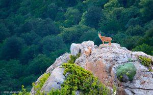 تصویری دیدنی از حیات وحش مازندران
