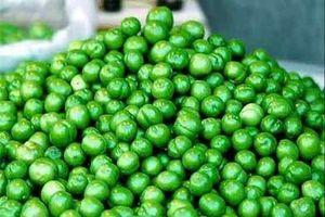 گوجه سبز سلامت نمایه