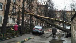 عکس/ یک کشته براثر طوفان مهیب در مسکو