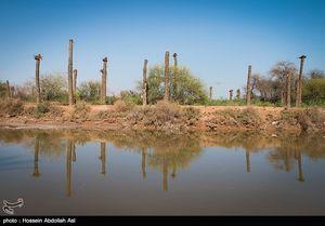 عکس/ نخلهای بی سر آبادان