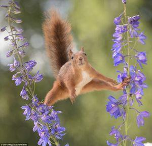 ژست جالب یک سنجاب