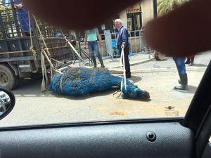 عکس/ حرکت عجیب طرفداران سعدحریری