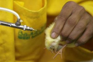 فیلم/ جایگاه جهانی ایران در تولید واکسن