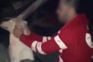 سگ آزار معروف در آبادان راهی زندان شد