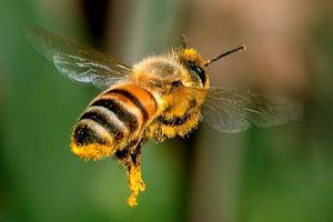 فیلم/ لحظهای شگت انگیز از بال زدن زنبور