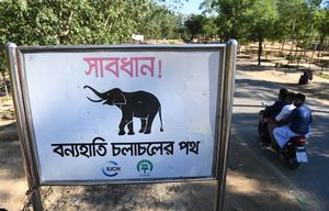 عکس/ مسیر فیلهای وحشی