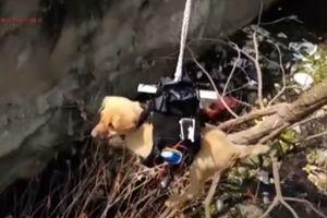 فیلم/ نجات سگ گرفتار توسط پهباد