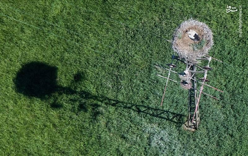 تصویر هوایی جالب از لانه یک کبوتر در آلمان