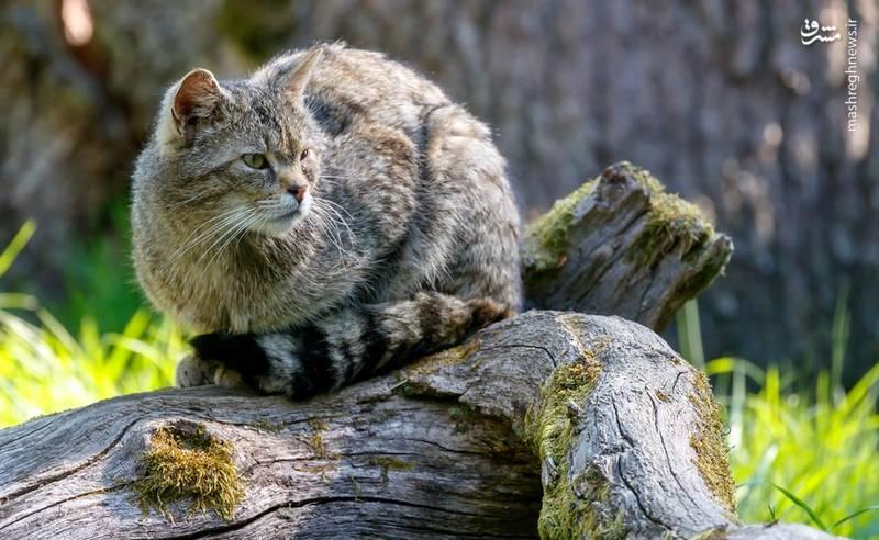 ژست خاص گربه در آلمان
