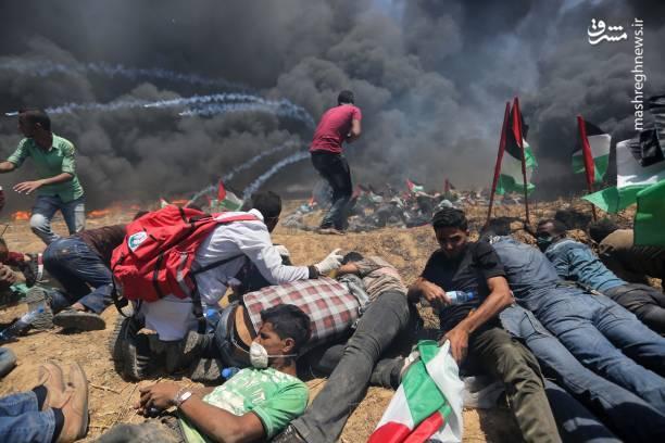 تصاویری از خط مقدم مبارزان فلسطینی با کفتارها