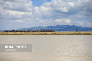 عکس/ احیای تالاب خشک شده در همدان