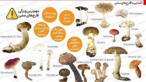 عکس/ قارچهای مرگبار را بشناسید