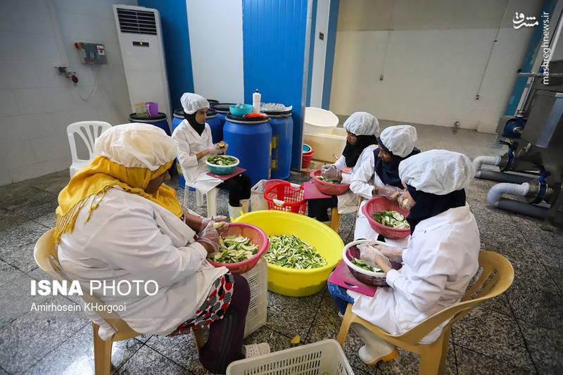کارگران کارخانه در حال خورد کردن انبهها جهت پخته شدن و بسته بندی در مراحل بعدی