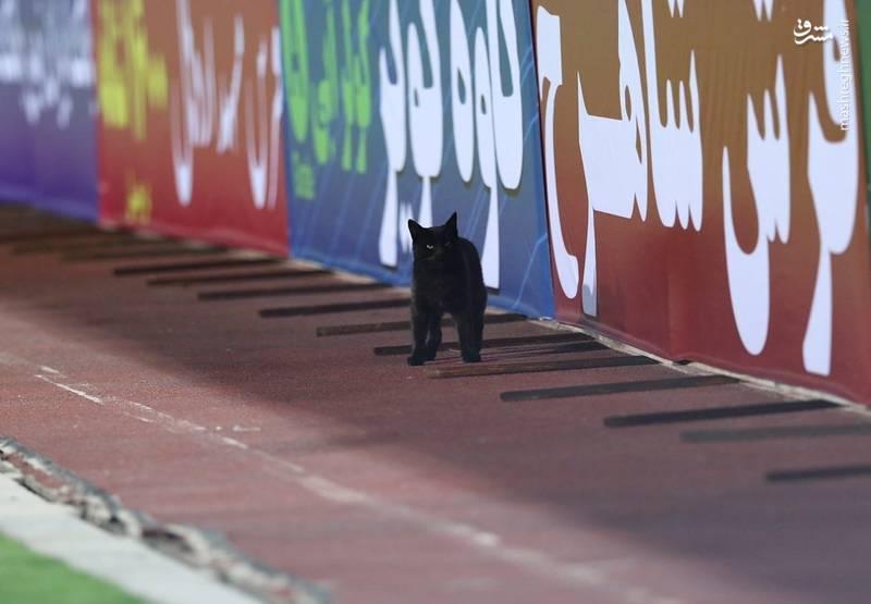 مشرق نیوز - عکس/ گربه سیاه بازی تیم ملی در آزادی