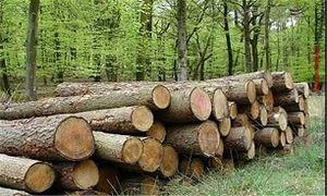 رای جالب یک قاضی برای عامل قطع درختان