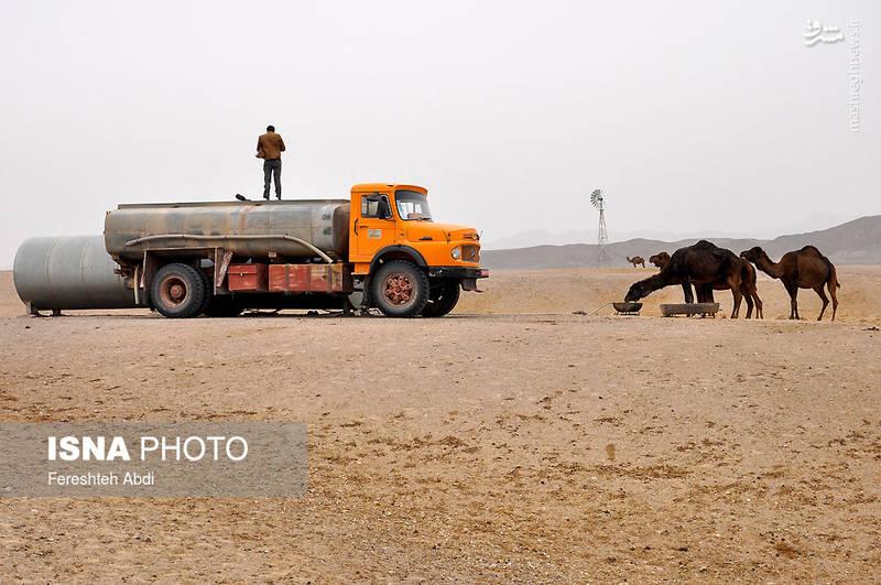 منطقه عشایری «جنگل نخاب»؛ آب شرب این منطقه هر چند روز با یک تانکر توسط امور عشایر تامین میشود.