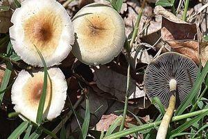 آخرین آمار مسمومان با قارچ در کشور