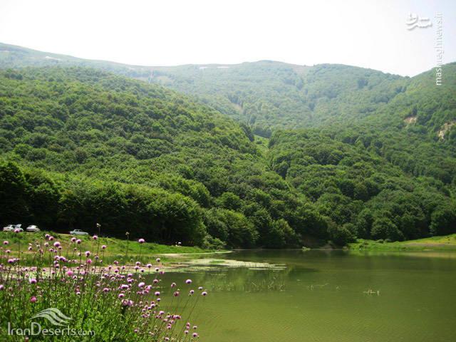 در اطراف دریاچه درختان راش ، بلوط و زالزالک دیده می شود که باعث زیباتر شدن آن شده است و دریاچه را از دو سمت احاطه کرده اند.