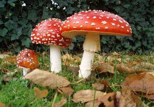 """آنچه درباره """"قارچ سمی و غیرسمی"""" باید بدانید +عکس"""