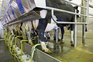 شیر خام گران شد