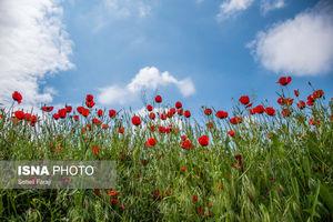طبیعت رنگارنگ «آذربایجان غربی»