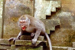 فیلم/ حمله میمونها به مردم!