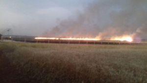 زمینهای کشاورزی مردم محاصرهشده الفوعه و کفریا در آتش تروریستها سوخت + تصاویر