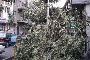 توفان تهران مصدوم نداشت