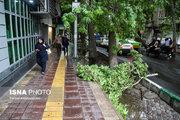 شکسته شدن درختان در پی طوفان تهران