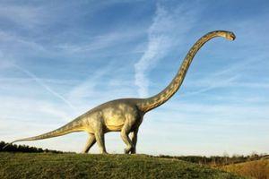 قدیمی ترین گونه یک «دایناسور» کشف شد +عکس