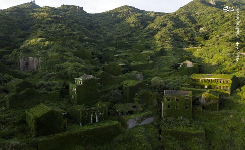 دهکده متروکه در جزیره شِنگشان چین که زیر خزه ها مدفون شده است.