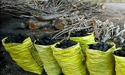 دود شدن چوب درختان زاگرسی برای ۳ هزار تومان