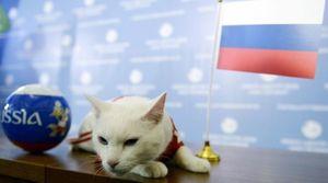 گربه پیشگو