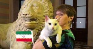 فیلم/ پیشگویی گربه معروف از برد ایران
