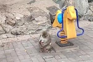 فیلم/ اتفاق دیدنی در یک باغ وحش
