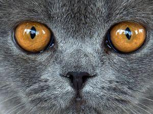 عکس/ نمایی نزدیک از چشم گربه