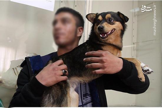 فیلم/ نظر مردم در مورد زندگی با سگ!