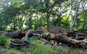 Image result for قطع کردن درختان
