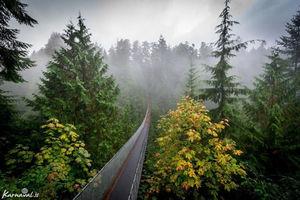 عکس/ پل زیبای کاپیلانو غرق در مه ,
