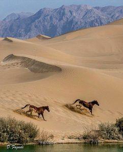 تصویری دیدنی از کویر یزد