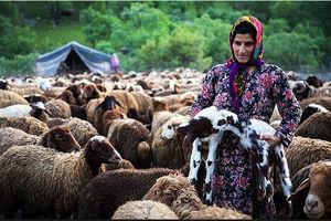 فیلم/ جشنواره کوچ عشایر در کهگیلویه و بویراحمد