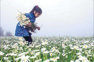 فیلم/ برگزاری جشنواره جذاب گلهای بابونه