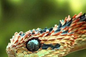عکس/ زیباترین گونه مار جهان!